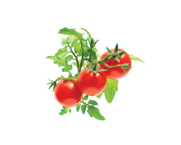 SMART HOME MINI TOMATO REFILL/TOM-REFILL-3 CLICK&GROW